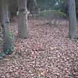善福寺公園の木立